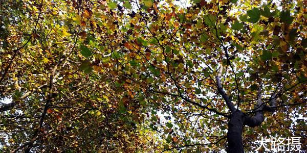 茂密的叶子挡住了天空